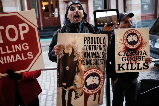 抗議人士舉著「加拿大鵝殺害動物」的標語。 (Getty Images)