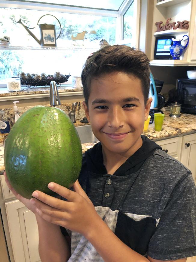 波基尼家十歲兒子洛希抱著世界紀錄最大酪梨。(美聯社)