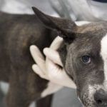 華人愛犬被鍊子勒死 「寄養」慎選寵物店