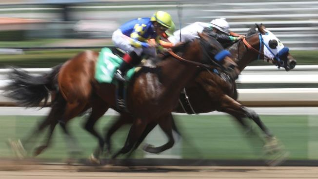 勝他跑馬場19日再度失去賽馬,自去年底以來,第34匹馬死亡。(本報檔案照)