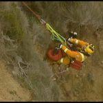 邊境牧羊犬困懸崖 澳警攀崖3小時救出毛孩