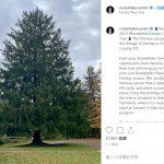洛克菲勒中心公布今年耶誕樹 11月9日運抵紐約市