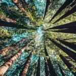 植樹遏止氣候變遷 科學家說成效被高估