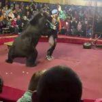 馬戲團表演到一半 大熊撂倒馴獸師並直撲觀眾席