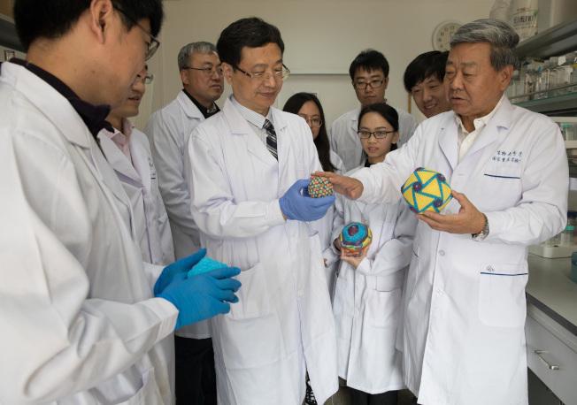 中國科學院生物物理研究所等科學家們成功分離出中國非洲豬瘟病毒流行株。(新華社)
