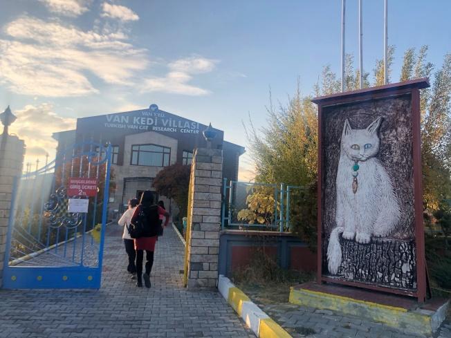 位於土耳其東部的梵貓研究中心,培育血統純正的梵貓。記者魏妤庭/攝影