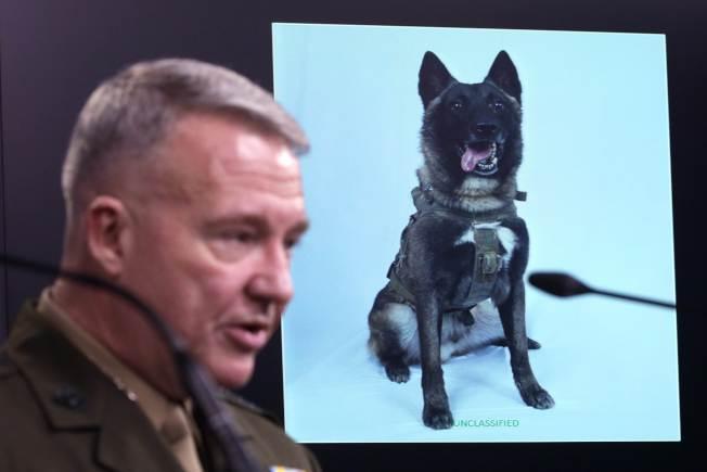 美軍中央軍區司令麥肯錫主持簡報,他說追擊IS首腦巴格達迪時,圖中的軍犬建立奇功。(Getty Images)