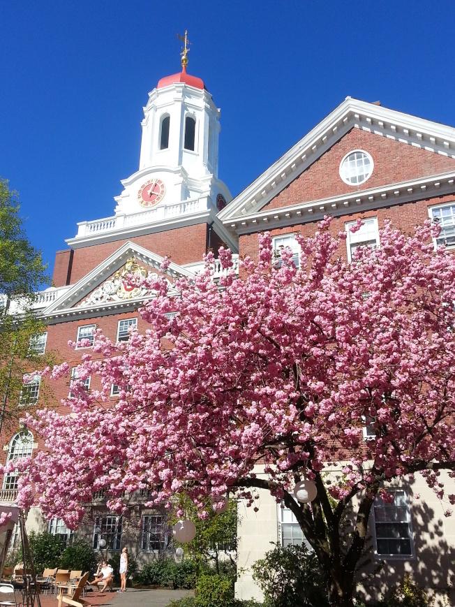 花團錦簇的哈佛大學校園。(校友王德龍提供)