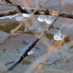 乍暖還寒 紐約上州明晨達冰點