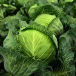 高麗菜一層層剝開後 裡面的菜葉需要清洗嗎?