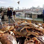 加州大肉蟹捕撈季再延 感恩節吃不到