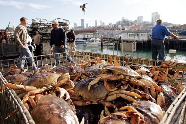 加州漁獵局又宣布初步決定,要再度延後捕蟹季至12月中。圖為去年檔案照。(Getty Images)