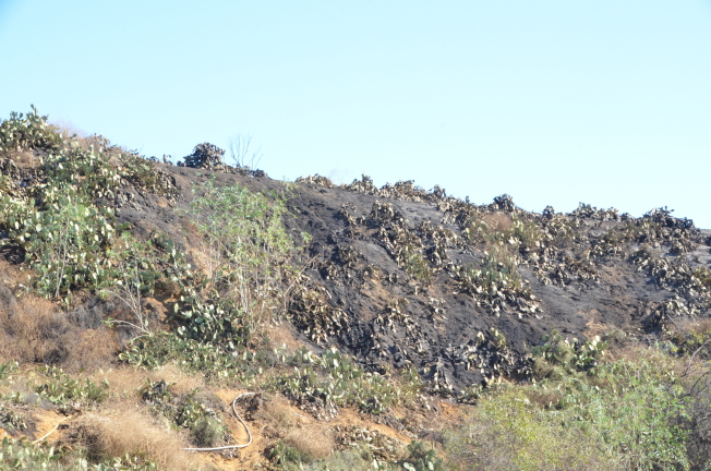 富樂頓自然保護區受災面積達11英畝。(記者王全秀子/攝影)