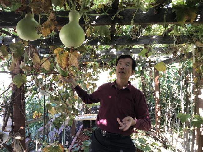 許希聖在自家庭院種植了百餘種蔬果。(記者啟鉻/攝影)