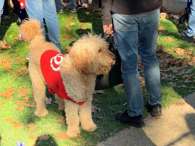 有民眾帶著心愛的寵物參加遊行。(記者張筠╱攝影)