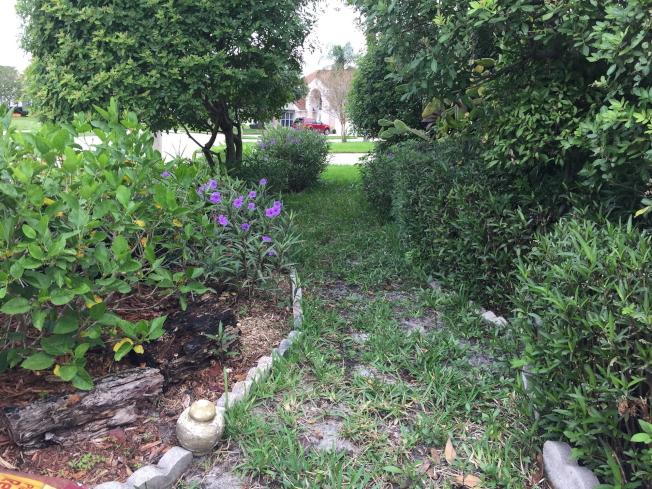 橘郡實施限制澆水,庭院每周僅一日一次。(記者陳文迪/攝影)