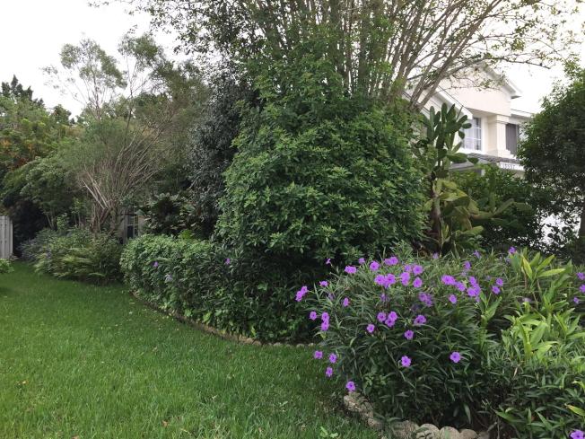 橘郡實施限制澆水,庭院及草皮每周僅一日可澆水一次。(記者陳文迪/攝影)