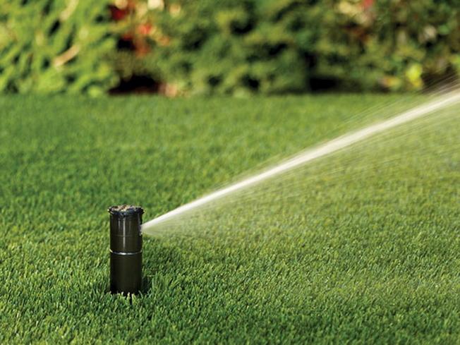 橘郡實施限水,草皮庭院澆水每周僅一日一次。(記者陳文迪/攝影)