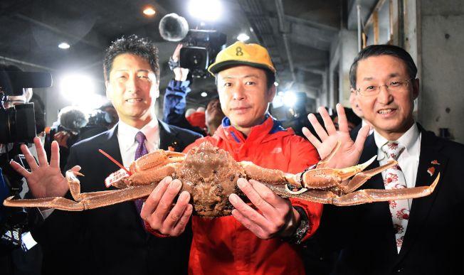 日本松葉蟹捕撈季6日登場。(Getty Images)