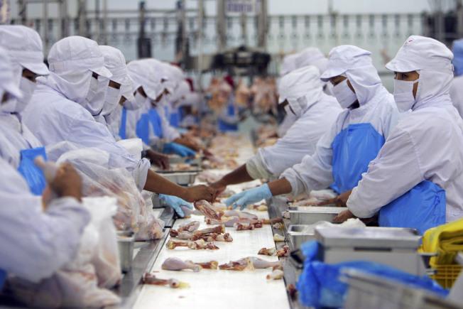 超過200萬磅雞肉正被召回中,因為可能被異物汙染,特別是金屬物質。圖為加工廠的工人處理雞肉。(Getty Images)