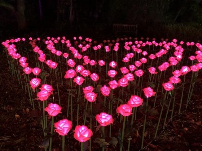 玫瑰愛心。(記者張宏/攝影)