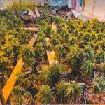 艾爾蒙地華商 推大麻公投達標