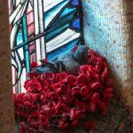 飛鴿入住澳洲戰爭紀念館 偷獻花築出美麗鳥巢