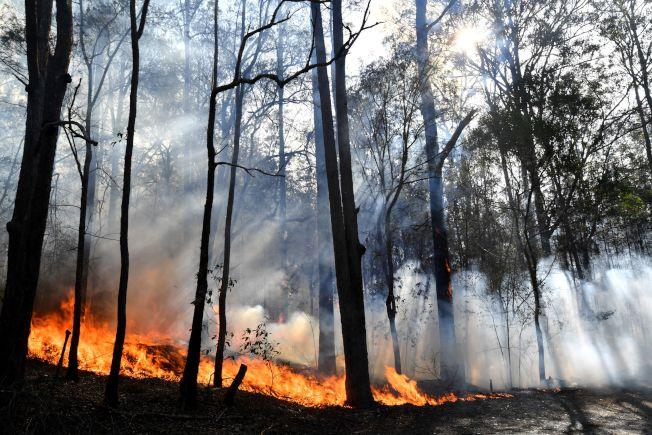 一場據稱由閃電引發的大火燒毀2000公頃的灌木林,其中還包含一座無尾熊保護區,恐有數百隻無尾熊死亡。Getty Images