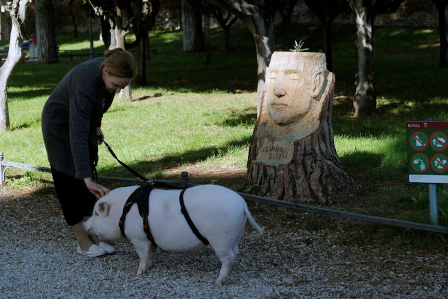 英國新節目挑戰道德議題,邀請家庭全心照養小豬後決定是否吃掉牠,圖非節目內容。(路透)