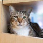 調皮貓咪屢次幫其他貓逃跑搗蛋 慘遭單獨拘禁