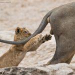 搞笑野生動物攝影獎 得獎的是這一幅