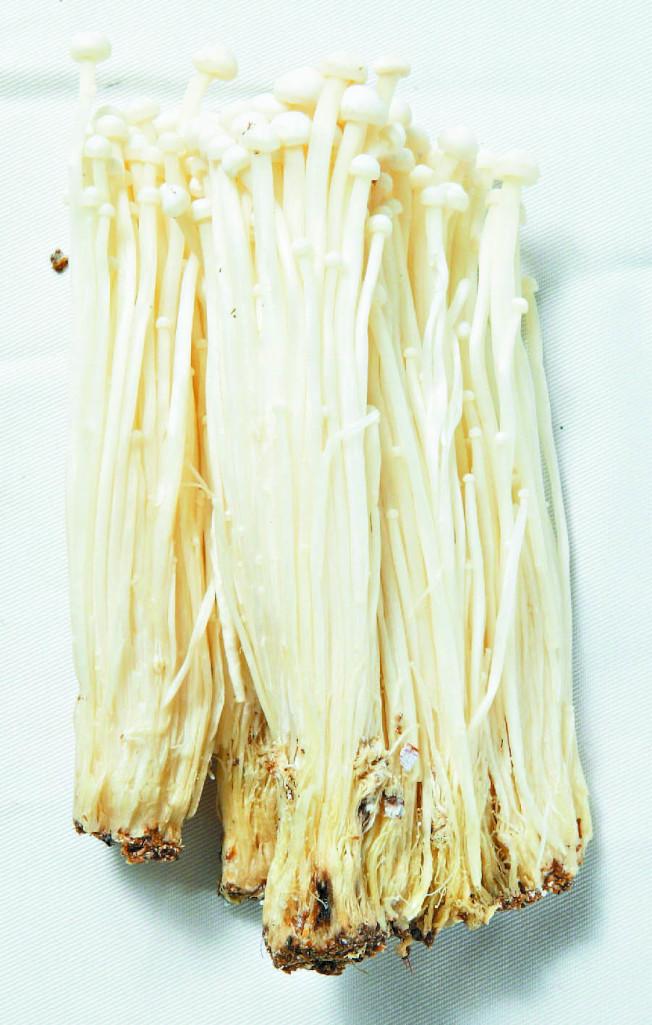 金針菇的多醣體、維生素B群突出。(本報資料照片)