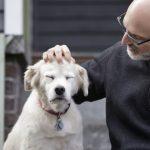 科學家徵1萬隻狗 尋找人類長壽秘訣