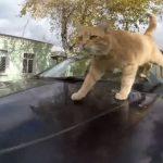 喵皇陪搭車!烏克蘭貓咪計程車 貓奴也瘋狂