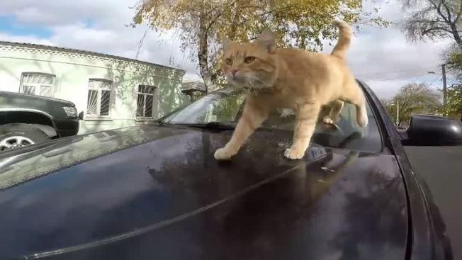 烏克蘭東北部的第二大城卡爾可夫有輛獨一無二的計程車,駕駛每天帶著自家的貓星人一起上路,在當地吸引了不少死忠乘客。路透