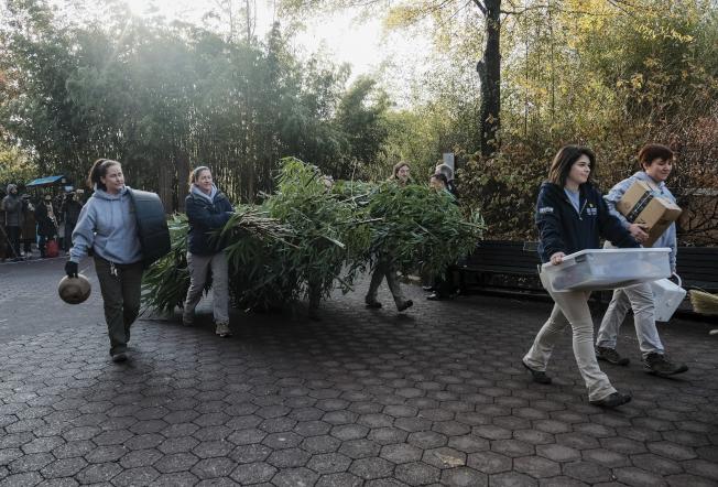 國家動物園人員19日把為貝貝準備的包括66磅竹子在內的「美食」,搬上專機。(美聯社)