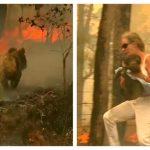 危險!眼見無尾熊快被燒死 女子脫上衣奮勇救出