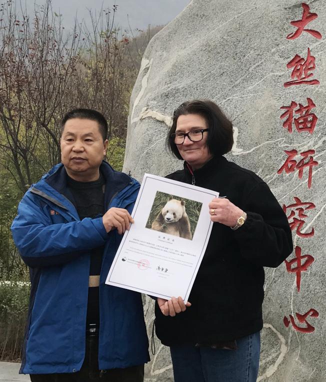 全球唯一圈養棕色大熊貓「七仔」20日被熊貓國際終身認養。「七仔」所在的陜西省林業科學院秦嶺大熊貓繁育研究中心和熊貓國際當天舉辦認養儀式。    (新華社╱陜西省林業科學院秦嶺大熊貓繁育研究中心提供)