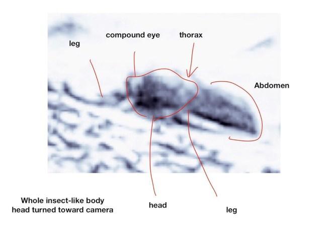 美國俄亥俄大學名譽退休教授羅莫瑟宣稱從照片發現火星生命存在的跡象,他斷言看得出生物的外型,類似爬蟲類和像是蜜蜂的昆蟲。(取材自俄亥俄大學)
