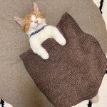 融化千萬網友!小貓跟人一樣 蓋被子睡姿萌翻