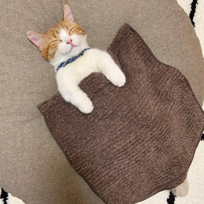 小貓茶太蓋著被子睡覺的甜蜜笑容,讓一眾網友神魂顛倒。圖/Nekonokimochi