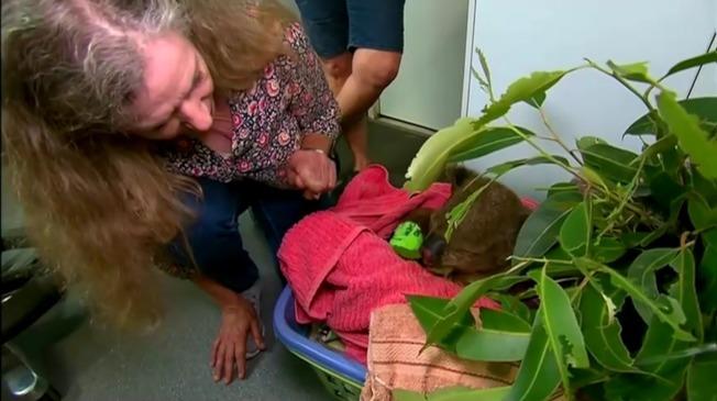 澳洲女子杜荷蒂20日到獸醫院探望前一天被她從火場冒險救出的無尾熊路易,並謙稱「只是天生本能」促使她伸出援手。路透