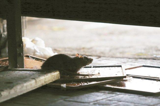 衛福部表示,密切監視中國鼠疫疫情變化,若評估社區感染風險提升,將及時發布旅遊疫情警示。圖/聯合報系資料照片