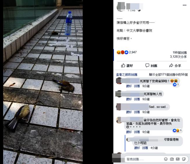 疑催淚彈釋放毒氣,路面多處可見鳥屍。(取材自臉書)
