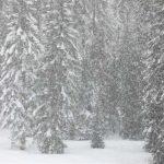 感恩節周末 太浩湖降初雪
