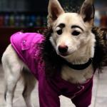 狗臉有如人臉長眉毛 以為是蠟筆小新惡作劇