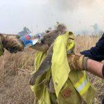 從澳洲野火中救出的無尾熊 傷重被安樂死