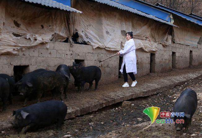 24歲女孩張志遠三年前大學畢業實習開始,就回家鄉在深山裡幫家裡飼養2000頭黑豬。(取材自中國青年網)