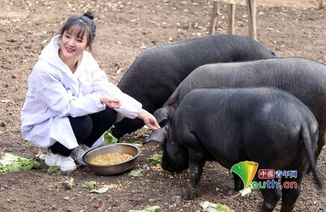 24歲高顏值女孩張志遠三年前大學畢業實習開始,就回深山幫家裡飼養2000頭黑豬。(取材自中國青年網)