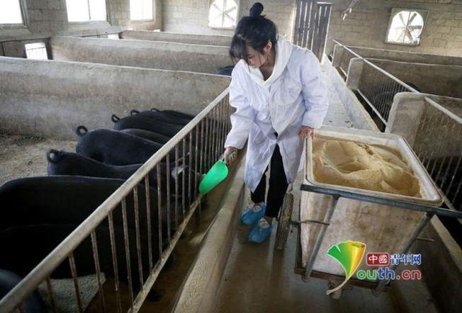 張志遠在養豬場餵豬。(取材自中國青年網)